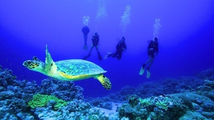 Ankhtours, Hurghada Red sea