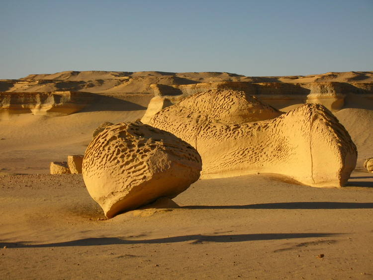Ankhtours, fayoum oasis trip, the valley of the whales.